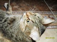 Кошечка Ляля, Сорочинск, id129970710