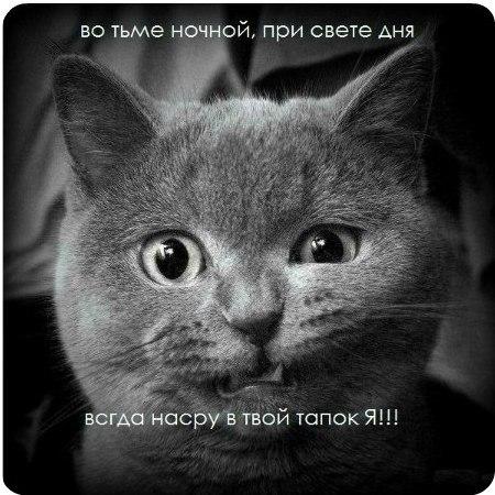 Смешные милые коты и кошки поднимут