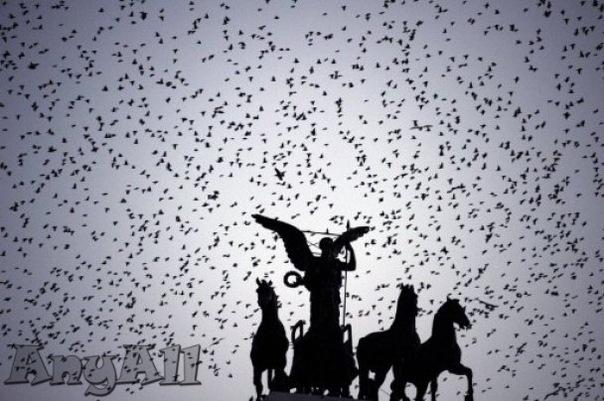 Описание: b Птицы уже начали прилетать на зимовку.