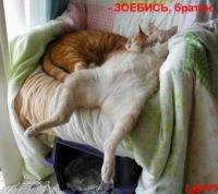 Лёха Киллер, 17 мая , Тольятти, id109367194