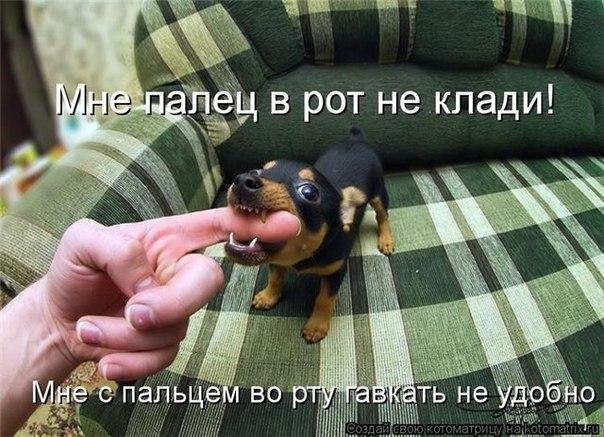 http://cs10257.userapi.com/u160729050/-6/x_615ef1ff.jpg