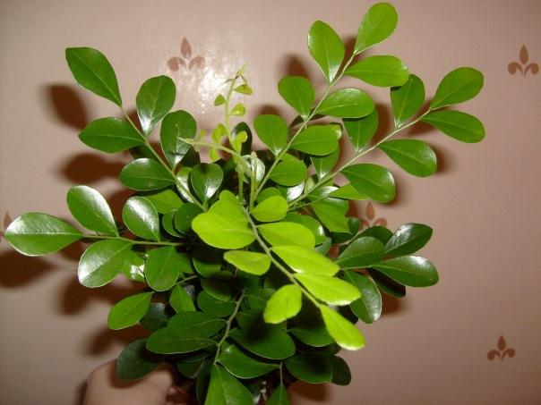Комнатные цветы купить с рук пермь где в калининграде можно купить цветы бальзамин