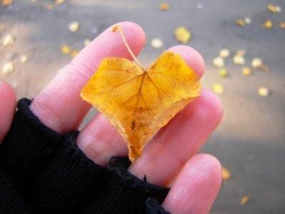 Жовтий осінній листок