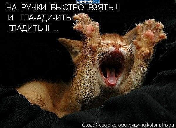 Кошачий юмор - Страница 5 X_3d11fffe