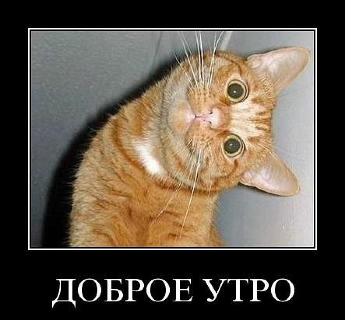 24. Фото созданные в приложении vk.com/fotiko.