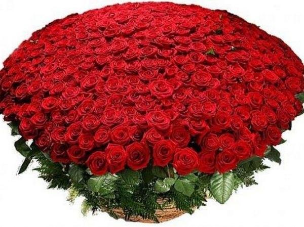 фото 100000 роз