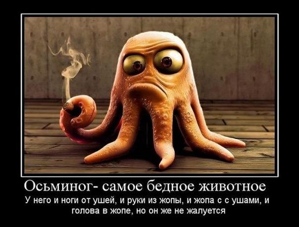http://cs10294.vkontakte.ru/u9674573/122388621/x_671d00e3.jpg