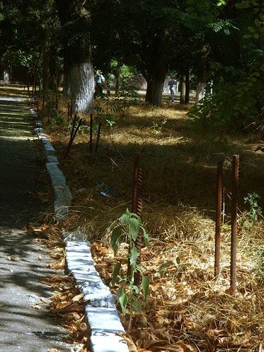 Херсон, парк им. Ленина
