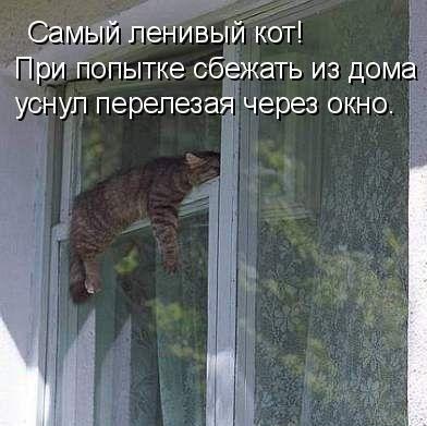 фото приколы юмор