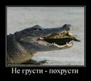 Alexey Biryukov фото #36