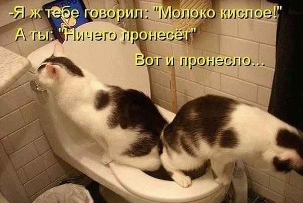 http://cs10310.vk.me/u30224600/-14/x_d0caa436.jpg