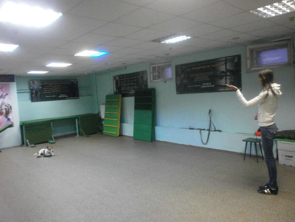 Дрессировка на Новоизмайловском