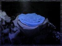 Синяя****роза Восточная, 22 сентября 1992, Иркутск, id85357647