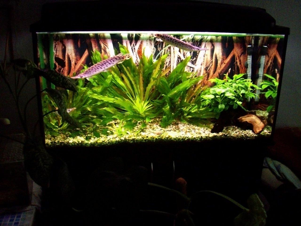 Дизайн аквариума на 200 литров фото
