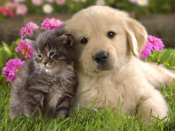 котики и собачки картинки