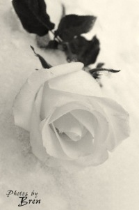 Ксюня Снежинка, 19 мая 1994, Санкт-Петербург, id124208710
