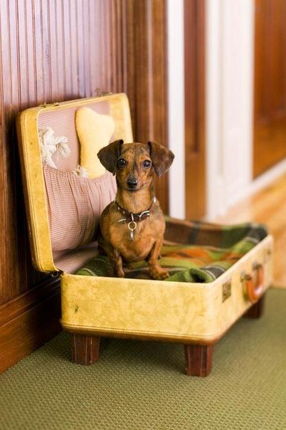 Форум / Фотоальбом / Фотографии площадки и не только / Разные интересные фото с собаками - Дрессировка собак в Харькове - КГ Ава
