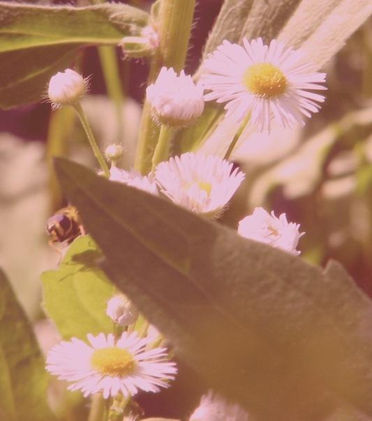 оторгафія комах, макро