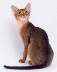 Я маньяк) У меня уже итак две кошки, а я хочу еще и третью.