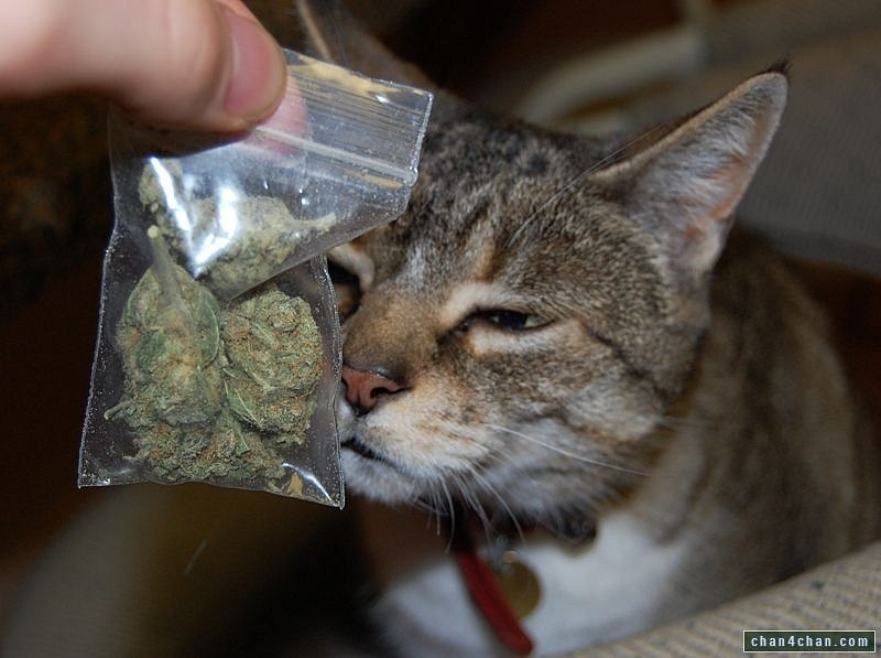 Does cat pee smell like weed
