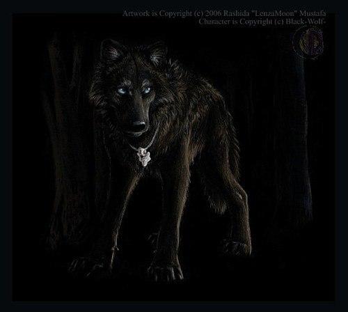 Финальный рисунок волка карандашом