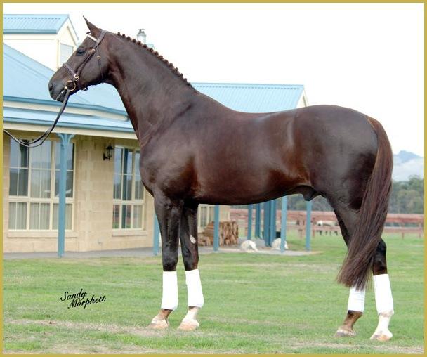 Игра Лошадь И Пони Мой Конезавод