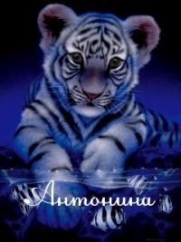 Антонина Каргина, 27 сентября 1987, Волгоград, id102349631