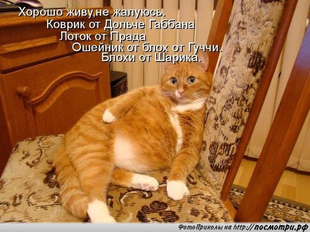 http://cs10378.vk.me/u56464427/151497948/x_7c8b4192.jpg