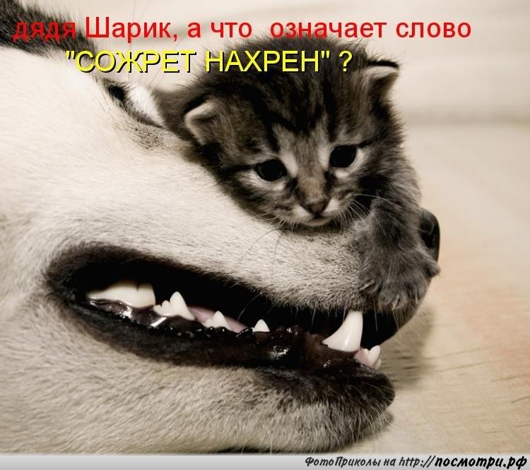 https://pp.userapi.com/c10378/u56464427/151497948/y_fe945461.jpg