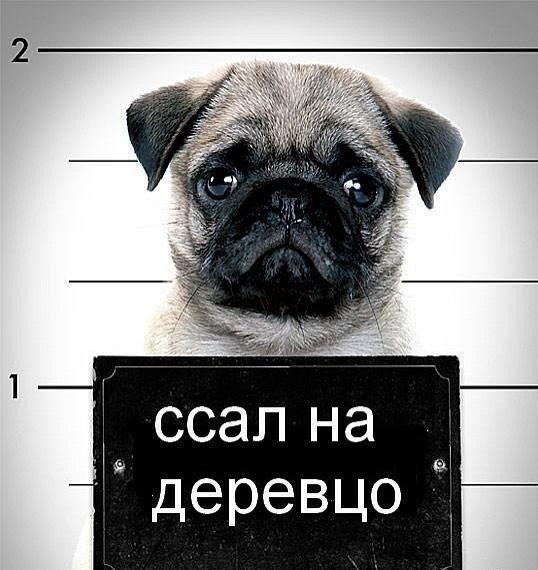 Синельников Сергеевич |