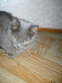 Алексей Бугров, 14 августа , Ковров, id102174029