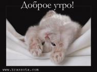 доброе утро))