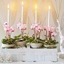 Девочки, Новый год прекрасная возможность подарить себе праздничное...