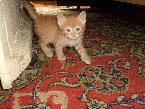 Котенок в домашних условиях