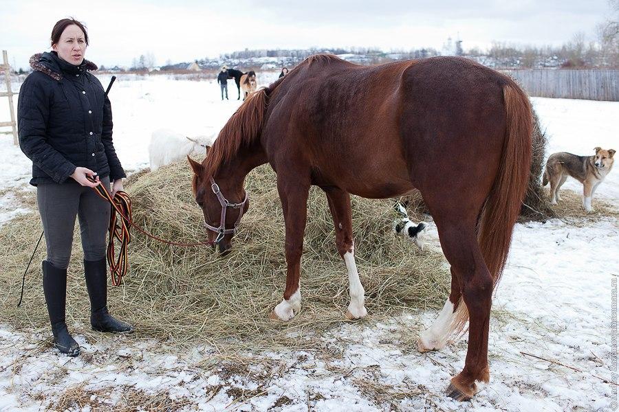 конная тренировка конь лошади