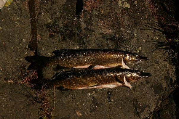 Отдых на природе (рыбалка, охота, грибы, пикники и пр.) X_b06fb05f
