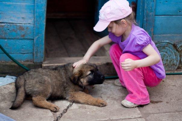 ...такой пес, помесь немецкой и кавказской овчарок, Рэм. а эта стрекоза...