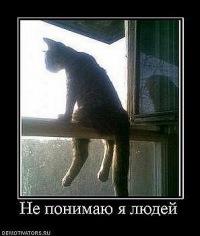 Cat Spirit, Владивосток