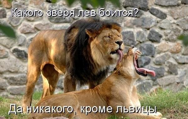 Лев и львица: предпросмотр