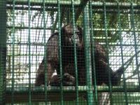Moro Hunter, 27 ноября , Сургут, id171204593