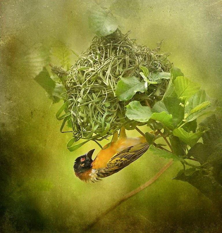 Произведения Полли Фаулер (Polly Fowler) представляют из себя симбиоз фотографии и рисунка. - Фото № 4