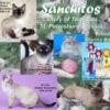 Тайские кошки и котята питомника Санчитос