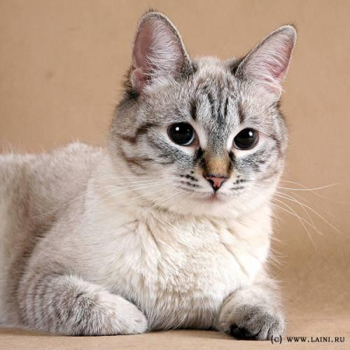 вышивка кошки схемы