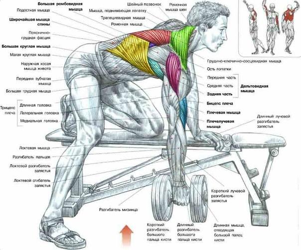 Скриншот. Упражнения для спины широчайшие мышцы спины комплекс упражнений в
