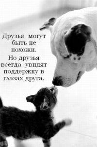 Кіт Ка, 8 апреля 1994, Донецк, id106001005