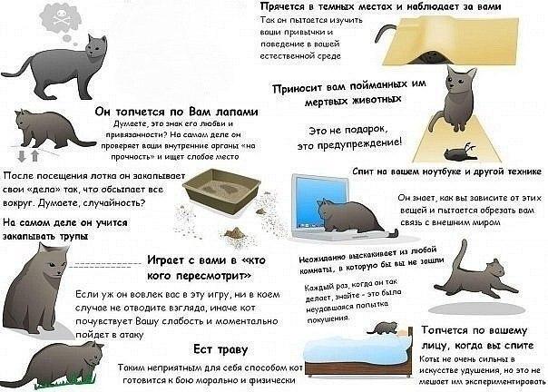 Признаки что ваш кот пытается вас убить