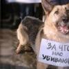 Мы против мучения животных!