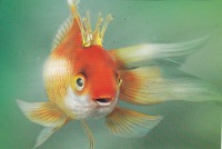 Рыбка Золотая, 11 января 1994, Бугульма, id120898042