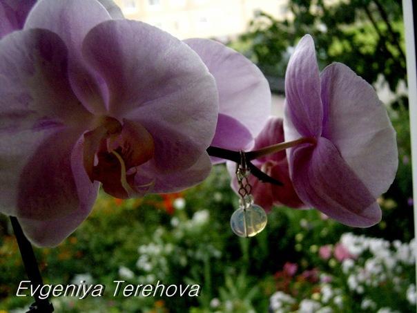 http://cs10490.vkontakte.ru/u72562883/140073948/x_0abce1db.jpg
