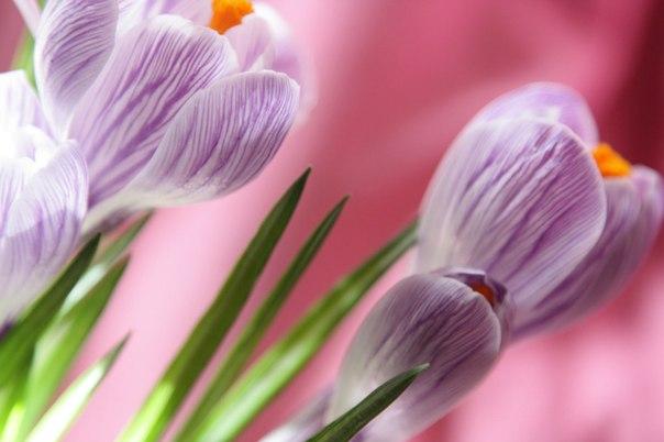 Цветы - остатки рая на земле!